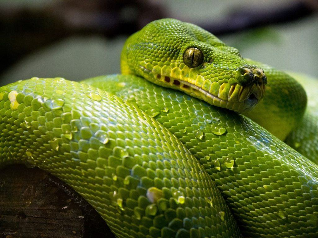 Green snake to suggest a reptile display